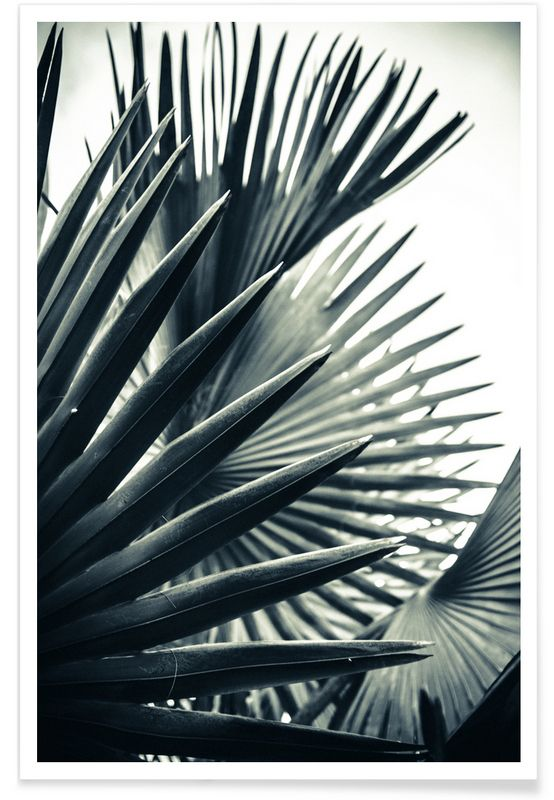 Palm Shade 2 als Premium Poster door Christoph Abatzis | JUNIQE