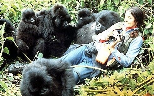 She Lived With Gorillas For 18 Years In Rwanda. After Digit's death, her and her assistants started going out on armed patrols around the gorilla habitat. They would ambush poachers, capture poachers, humiliate poachers, burn their camps, and steal their cattle. All of this made Fossey a much more controversial figure, with some seeing her as an animal rights hero while others argued she had become an increasingly unstable fanatic.