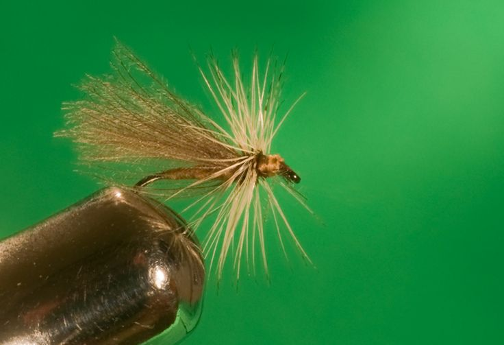 CDC Sedge