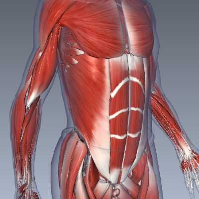 BioDigital Human: Explore the Body in 3D!