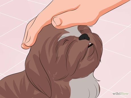 How to Train Your Shih Tzu: 12 Steps (with Pictures) - wikiHow                                                                                                                                                                                 More