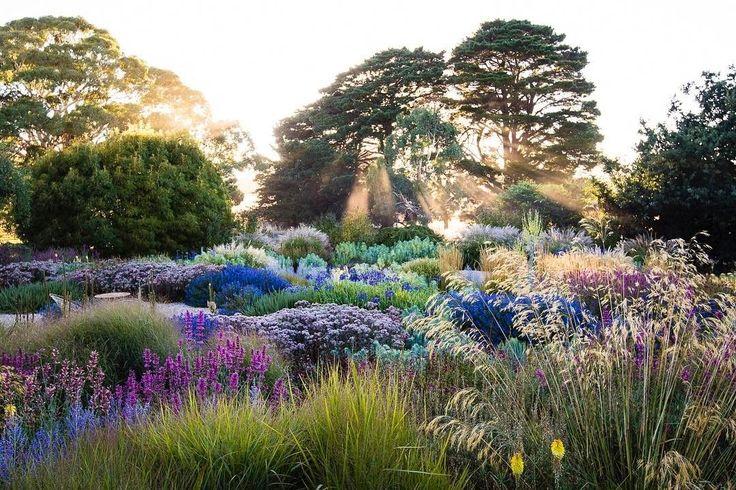 606 отметок «Нравится», 37 комментариев — Claire Takacs (@clairetakacs) в Instagram: «Michael McCoy's stunning design for this Australian garden, photographed on a chilly summer morning…»