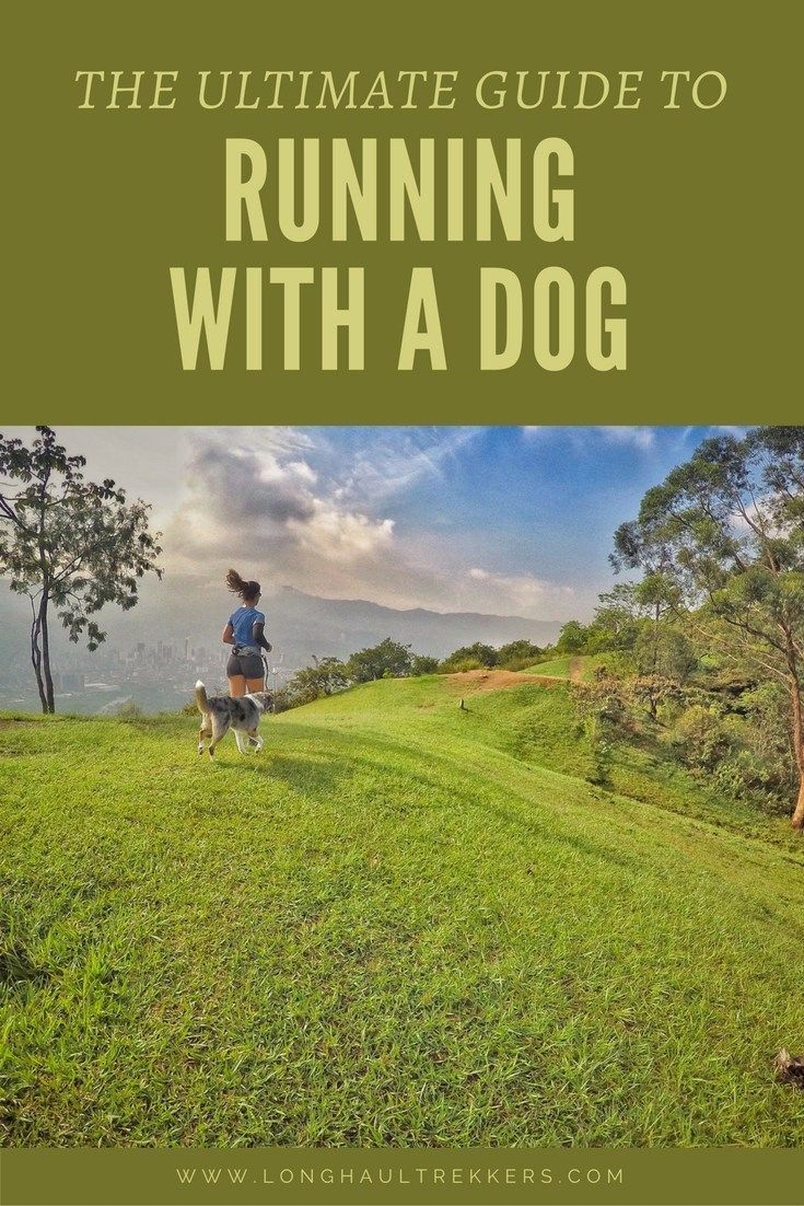 The Ultimate Guide To Running With A Dog Trail Running