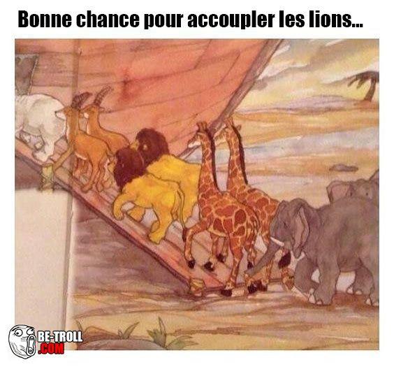 Bonne chance pour les lions sur l'arche de Noé ... - Be-troll - vidéos humour, actualité insolite