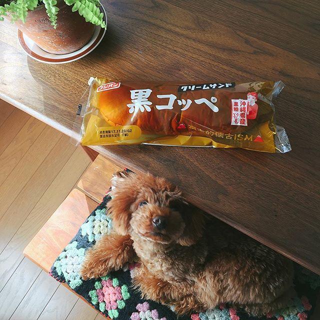 . いちばん好きな菓子パン#黒コッペ. カロリー表示は見なかったことにして食べます(๑¯◡¯๑) . #愛ちゃん青春の味. . #トイプードル #犬バカ部#ふわもこ部#トイプードル部#犬#愛犬#わんこ#トイプー#犬のいる暮らし#いぬすたぐらむ#パン#菓子パン#コッペパン #toypoodle#instadog#lovely#dog#lovedogs#doglover#ilovemydog#petsstagram#instagramdogs#pet#pets#instafood