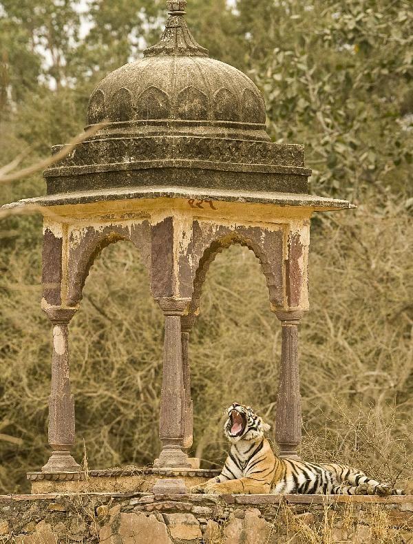 Ranthambore National Park - Rajasthan, India