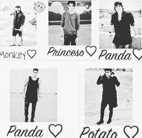 MI PRINCIPE, mi panditas, mi potato, y mi monkey
