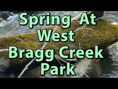 Spring at West Bragg Creek Provincial Park 4K Video – Journey Alberta