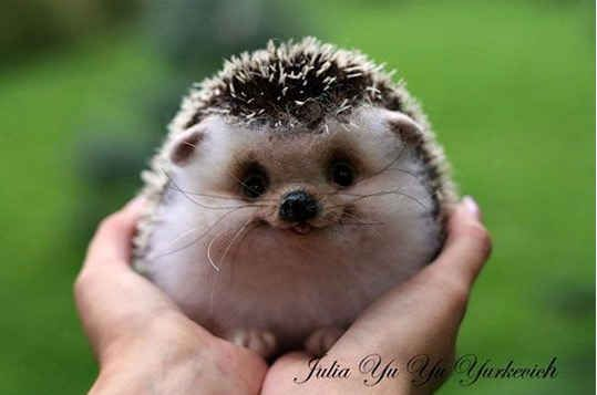 """Also, a group of hedgehogs is called a """"prickle."""" 
