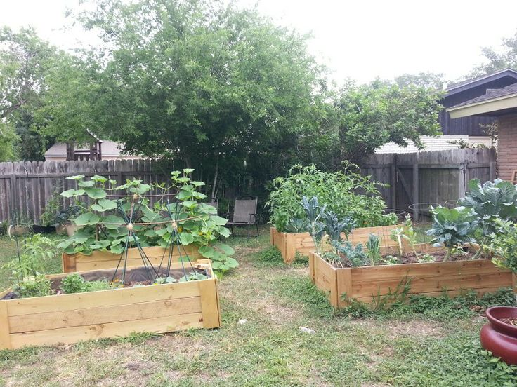 Raised garden beds made with fence boards and lined with