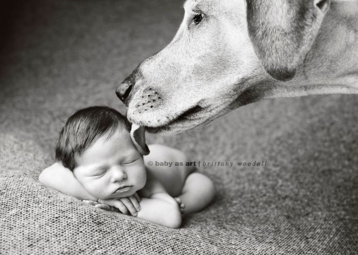 seattle newborn photography shoot for erin vey (dog photographer) of her dog, gracie and her new baby sister, maggie