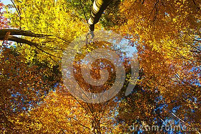 Autumn Foliage - Download From Over 41 Million High Quality Stock Photos, Images, Vectors. Sign up for FREE today. Image: 61363222