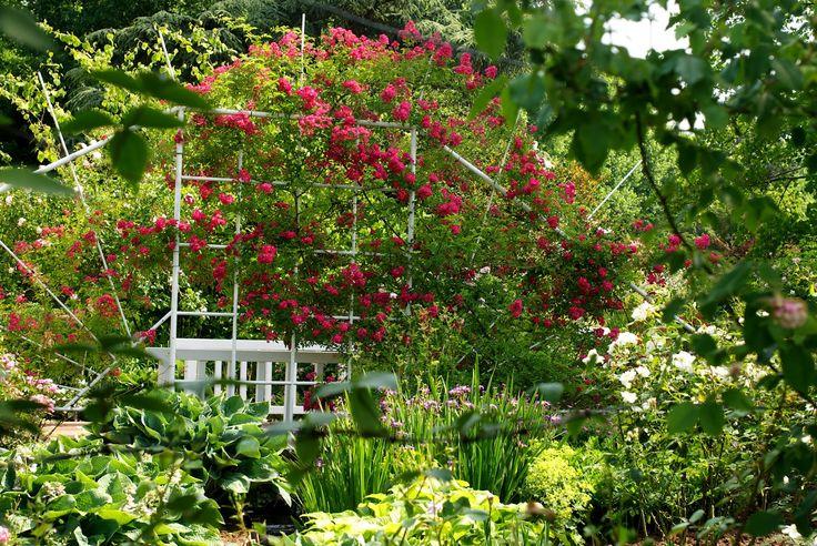 die besten 25 rosengarten zweibr cken ideen auf pinterest rosensorten david austin rosen und. Black Bedroom Furniture Sets. Home Design Ideas