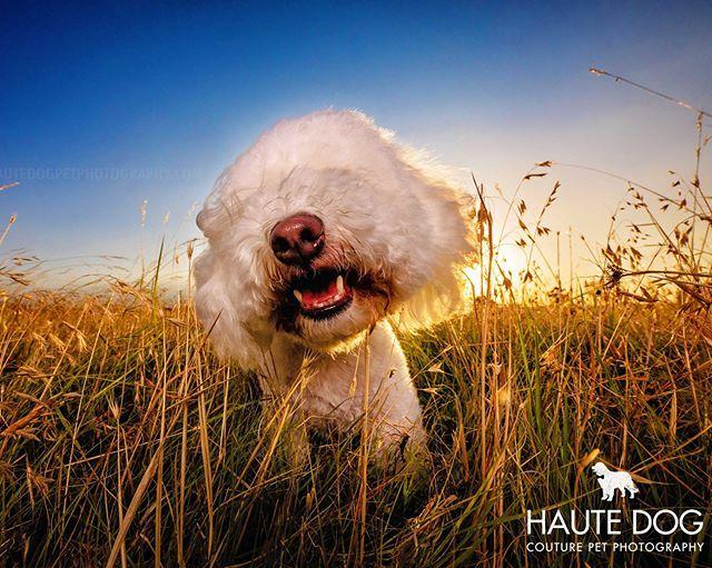 Dog Haute Dog Image By Ane Van Der Merwe In 2020 Animal