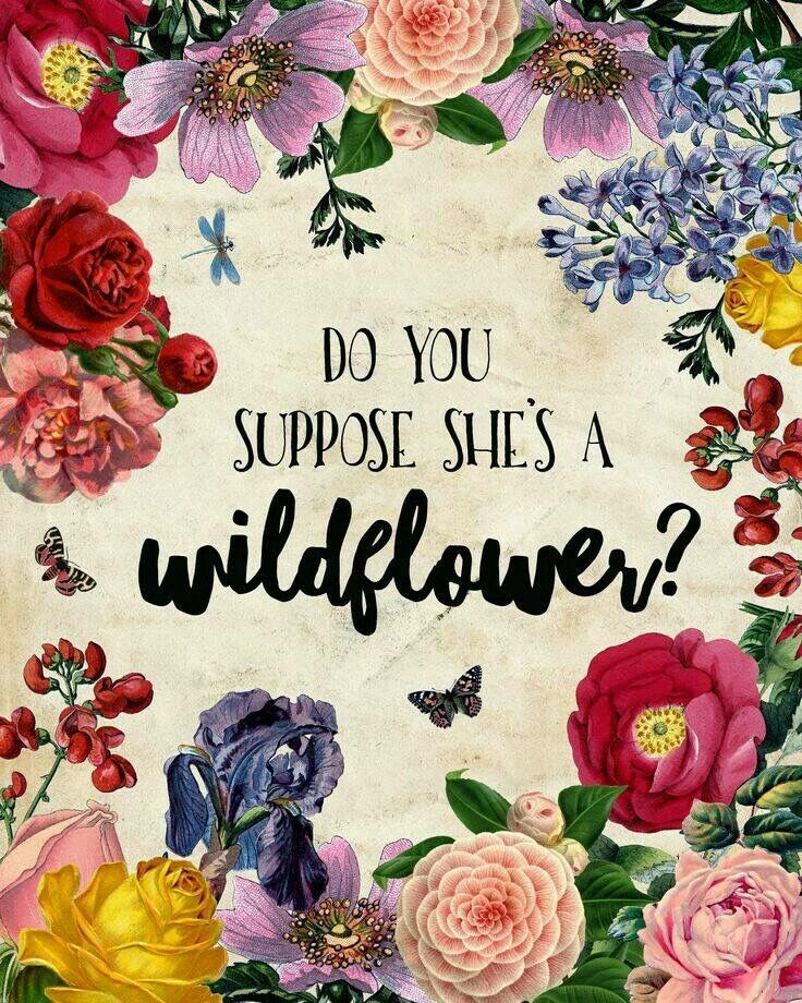 """Do You Suppose She's A Wildflower?"""