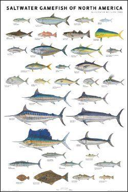 Pesca de fondo, currican costero, pesca de altura.