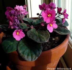 As 25 melhores ideias de plantas de sombra no pinterest for Plantas para dentro de casa sombra