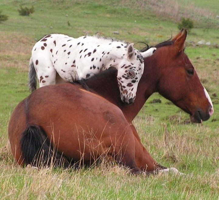 Mom when you were little did you have spots too? #SaddlesForSale #Horses #MySaddleTrader | MySaddleTrader.com