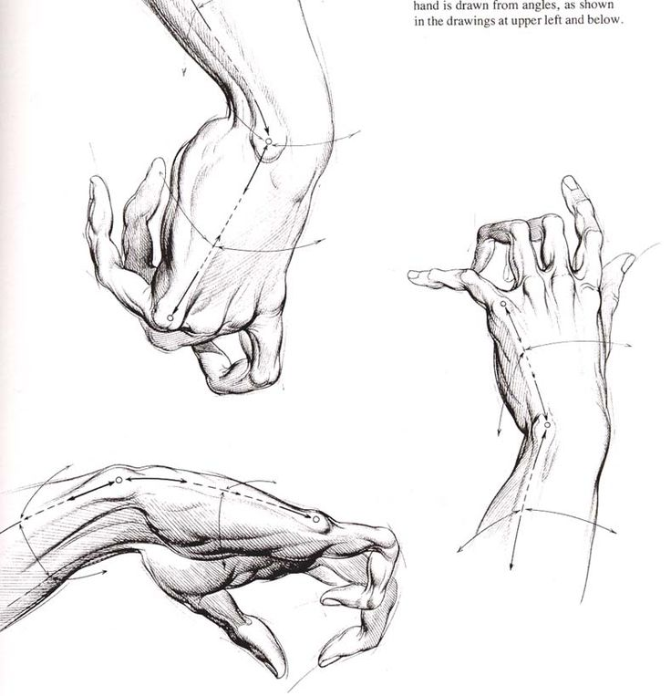 40 best Anatomy For Artists images on Pinterest | Human anatomy ...