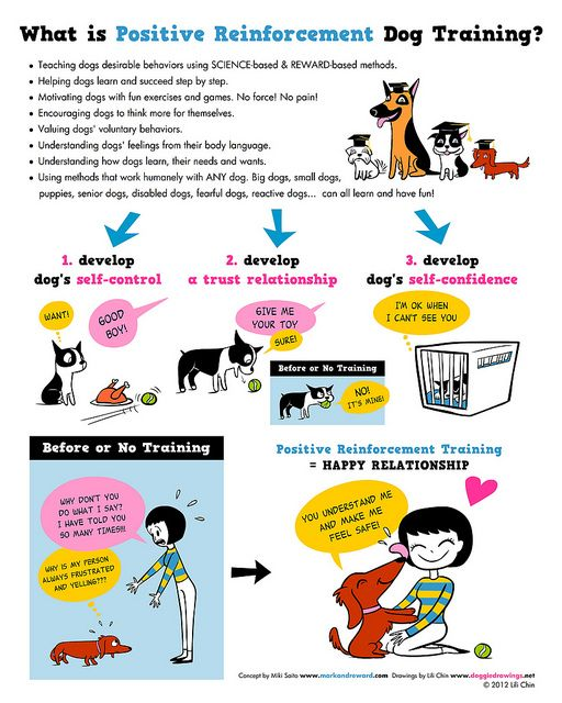 17 Best Images About Reinforcement On Pinterest: 17 Best Images About Dog Info That Matters On Pinterest