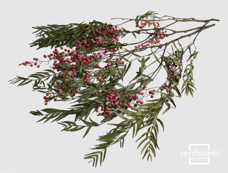 Pepper Tree  Inspiration: The perfect flowing pendant-effect, especially if combined with foliage like the amaranthus. Works equally well in suspended plant arrangements and vertical gardens or green walls.