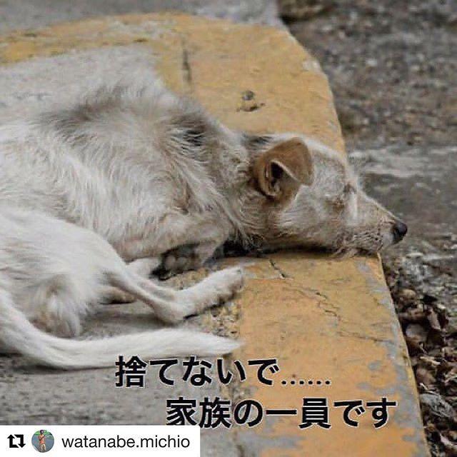 本当に命って難しいね。犬猫は大事にするけど牛豚鳥は食べるし虫は殺すし。矛盾は沢山ある。#愛犬#dog #殺処分#ペットショップ#pet#ブリーダー#里親#命#考える#捨てないで#殺さないで#難しい問題#矛盾#動物