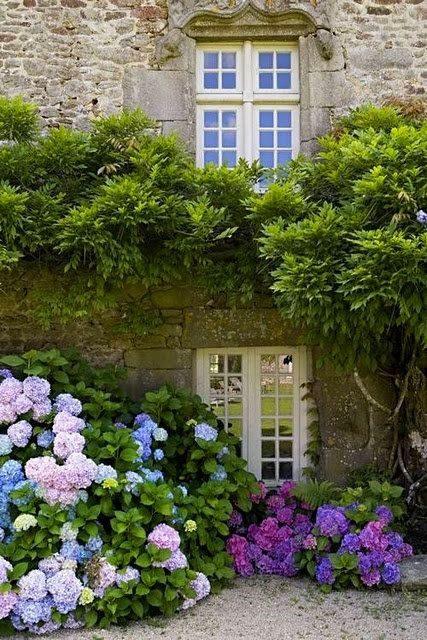 hydrangea in front of a french country home http://www.scoop.it/t/mattress-for-side-sleepers/