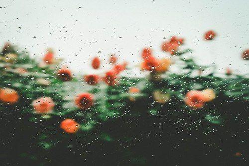 pinterest: lillieataylor