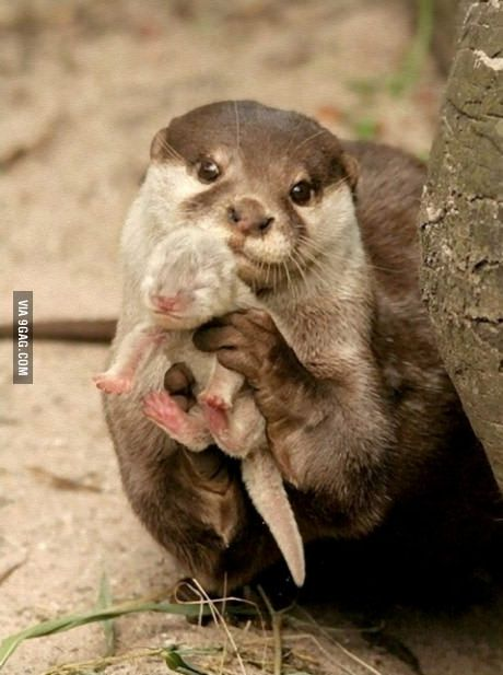 I maed dis! Who else is obsessed with otters? I mean look at these cute motherf*ckers...