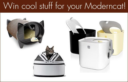 Modern cat toys for your pets