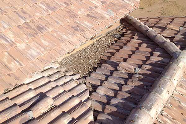Pigeon Control, Bird Control, Pigeon Removal, for Phoenix AZ or Phoenix Metro Arizona #pigeon #control,pigeon #problems, #pigeon #control #arizona, #pigeons #east #valley, #pigeon #control #phoenix, #pigeons #phoenix, #pigeon #removal #phoenix, #pest #control #mesa #az, #az, #arizona, #las #vegas, #nevada…