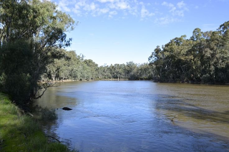 A pretty full Murray River.
