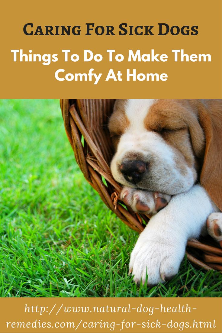 Read this page to find out things that you can do to care for sick dogs to make them more comfortable, and less stressed.