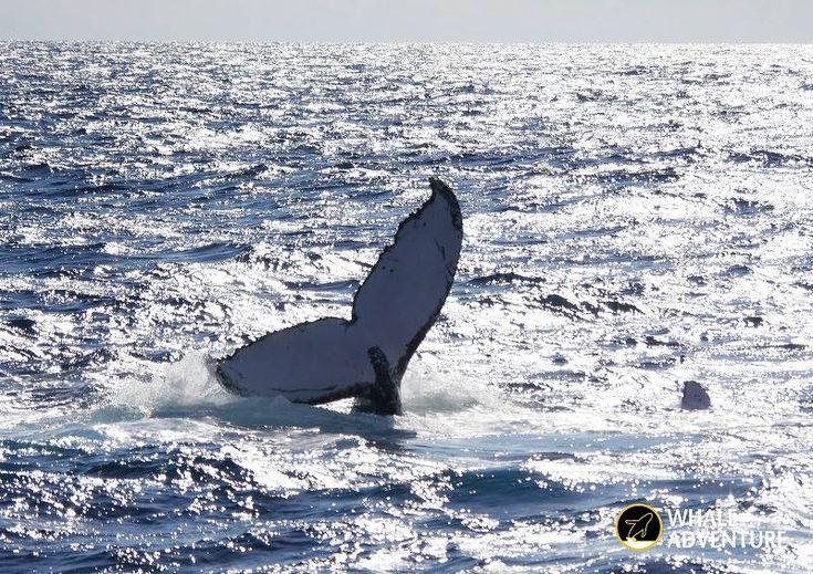 クジラを求めて右往左往