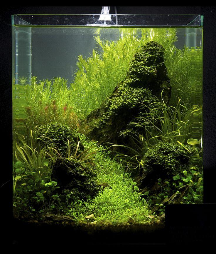 Die besten 25 nano aquarium ideen auf pinterest s wasseraquarienpflanzen aquarium und betta - Nano aquarium deko ...