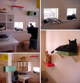 "Cat room. I may have reached an all time ""cat lady"" low"
