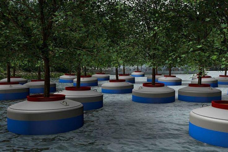 Rotterdam krijgt een in het water dobberend bos