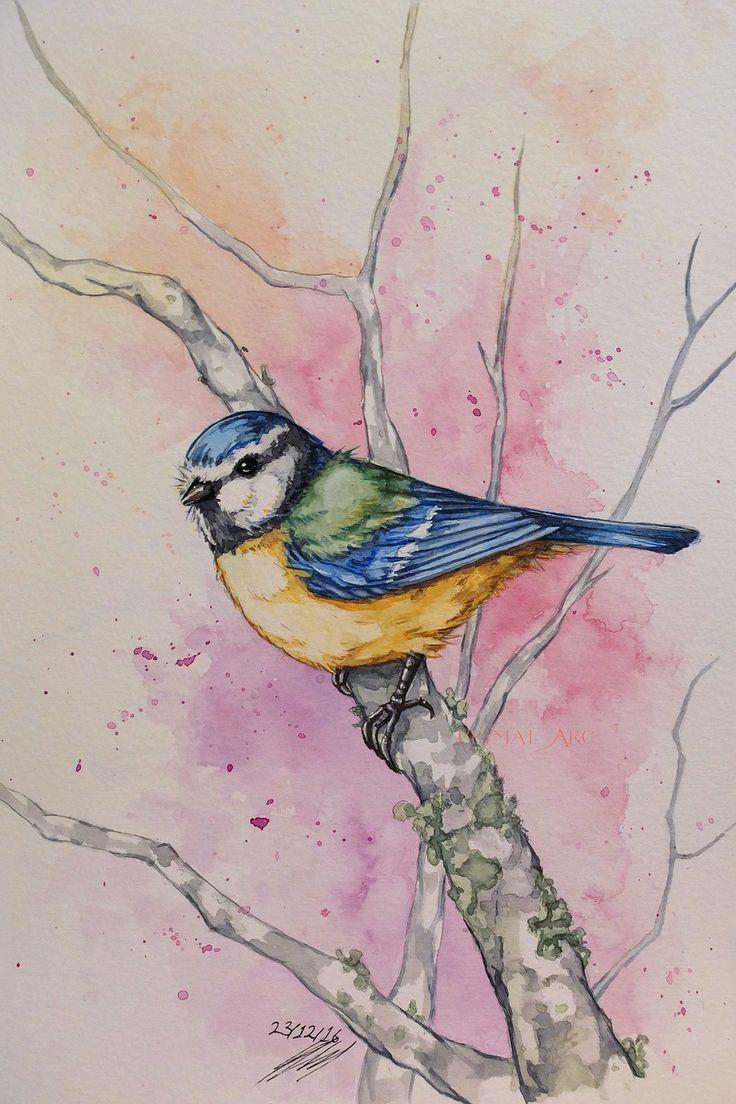 'Blue Tit' watercolour commission