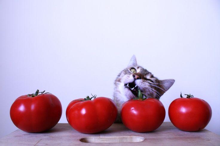 krem_pomidorowy_z_kotem