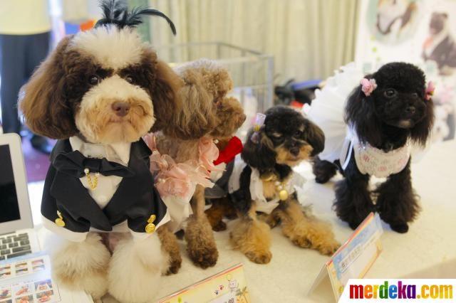 Sejumlah anjing mengenakan pakaian jas dan gaun yang lengkap dengan hiasan aksesoris saat di acara Taipei Pet Show 2012 di Nangang Exhibition Hall, Taipei.