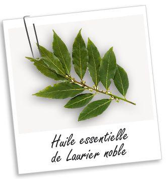 Huile essentielle Laurier noble Aroma-Zone : infections buccales, cutanées, virales...+ bon pour vaincre ses peurs