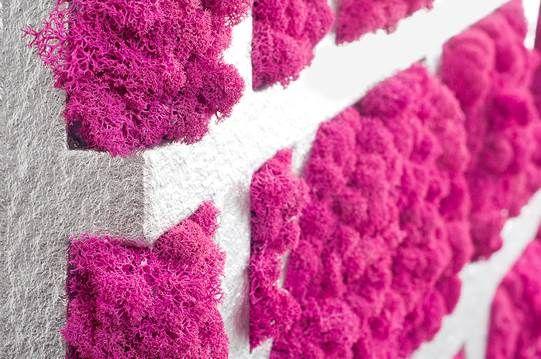 Moss carpet  #mosstrend #moss #мох