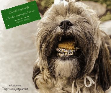 #Biscotti ai #germogli di erba medica #per il #cane  Elicats.com #TheFirstSocialPetGourmet! #social #homemade #petfood #rawfood #recipes #barf #dogs #cats #thefirstsocialpetgourmet #homemadepetfood #homemadepetfoods #rawfood #social #recipescats #recipes #recipe #dog #barf #cats #dogs #cat #diet #petfood #ricette #fattoincasa #cani #gatti @Elicats.com 🍖👈 🐶🐱