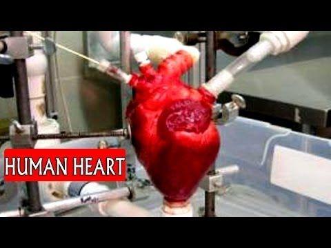 Human Heart    Allah Miracles    Allah ki Shaan    سُبحَانَ ال    Heart ...