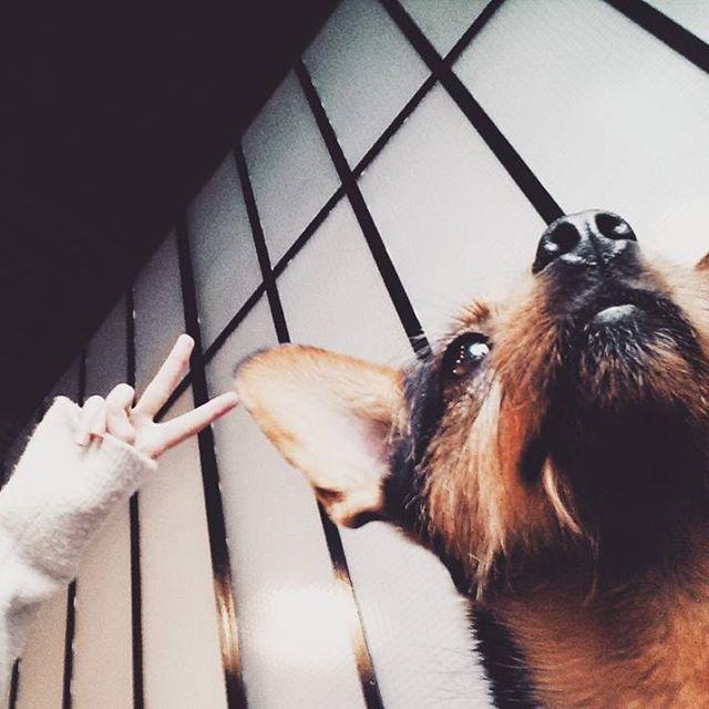 Peace love and puppies   #peace #love #puppy #alchemiaodkuchni #krk #krakow #igerskrakow #cracowbreakfastspots