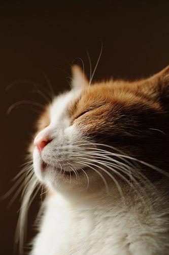 #cat: Cats, Happy Kitty, Orange Cat, Sleepy Cat, Weights Loss Videos, Weights Loss Tips, Weights Loss Secret, Weightloss, Animal