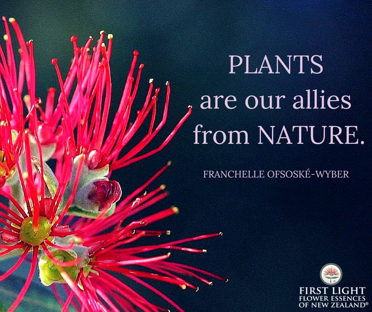 Plants are our allies from nature.