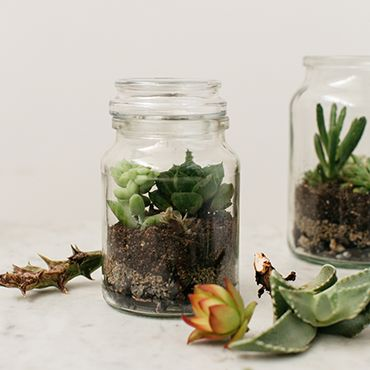 Moccona Jar Upcycling - Terrariums