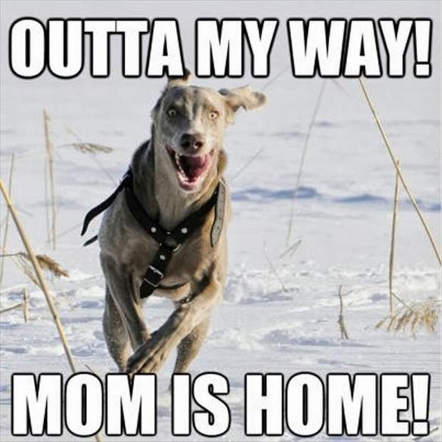 That is how my dogs act