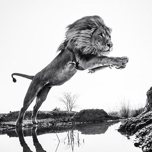 Photographed by David Yarrow
